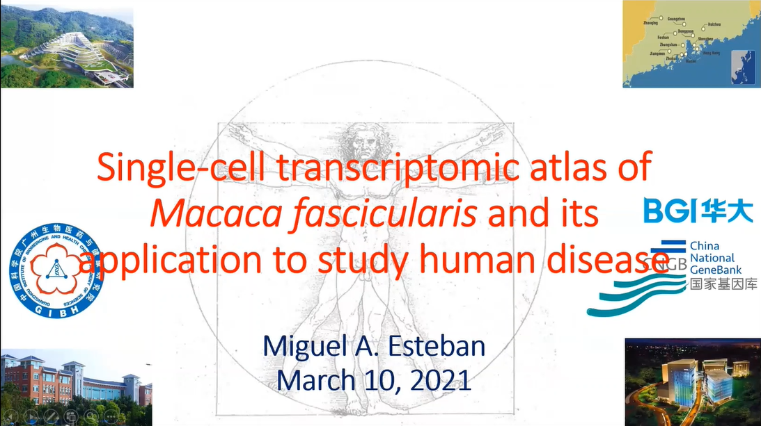 RNGS | Single-Cell Transcriptomic Atlas of Macaca Fascicularis and Its Application to Study Human Diseases